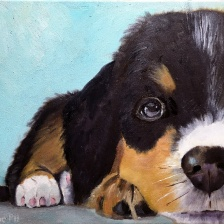 Mia Puppy (oil)