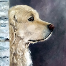 Yellow Lab (oil)